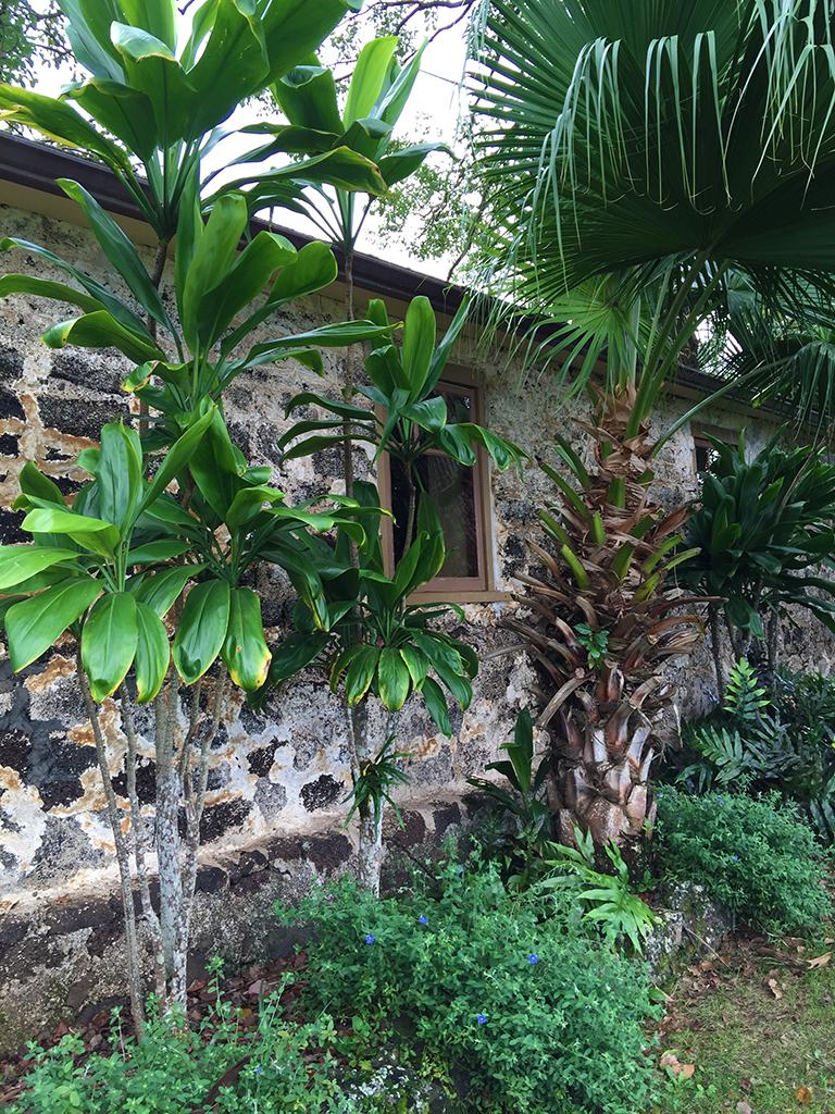 Maui Pineapple Wine Tour
